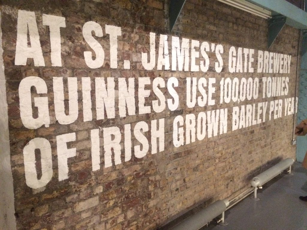 The Guinness Storehouse: barley fact